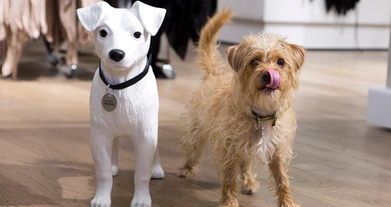 #RIGiveADogAHome – Give a Dog a Home with River Island & The Dogs Trust