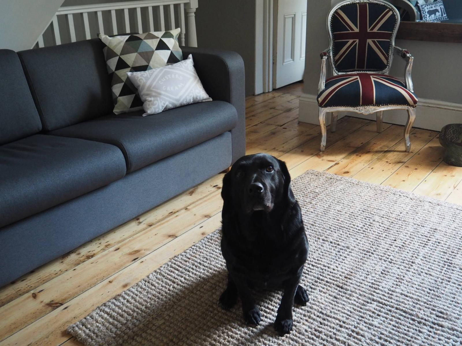 How To Keep Your House Clean When You Own A Dog Fizzy