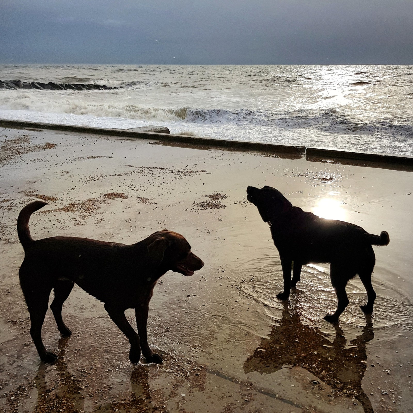 Life is Peachy – Beachy Walks & House Drama